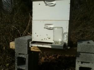 december honeybees